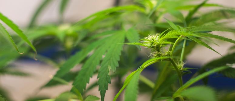 Cómo forzar a las plantas a florecer