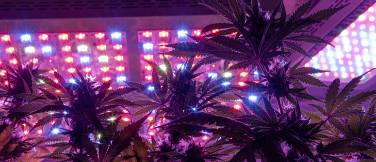 What are led grow lights?
