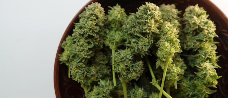 Craft cannabis: was du darüber wissen musst