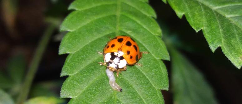 Los insectos son una prevención proactiva de plagas