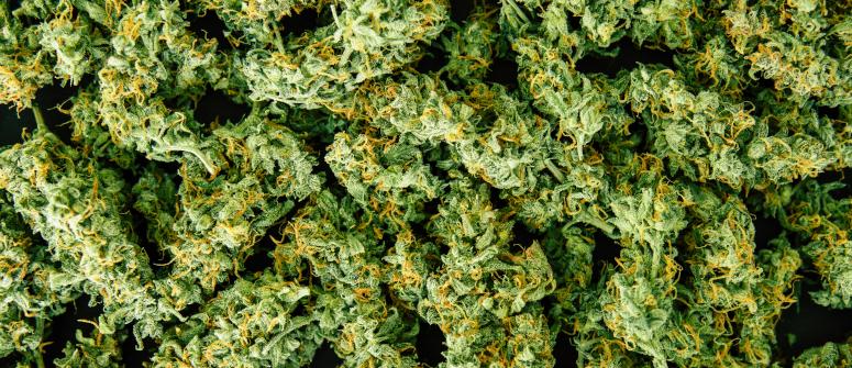 high THC strains