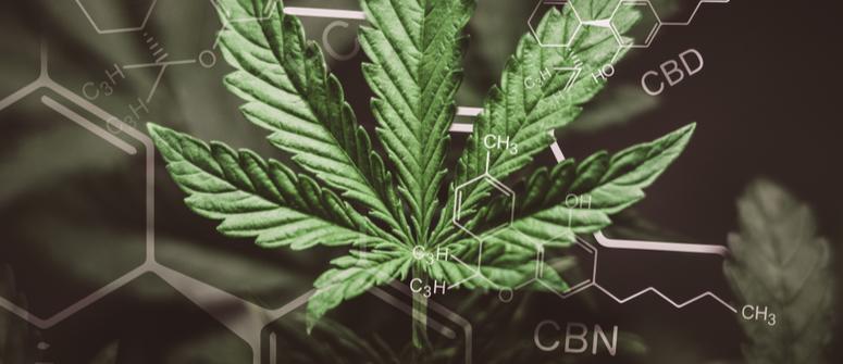 Quanti cannabinoidi ci sono in una pianta di cannabis?