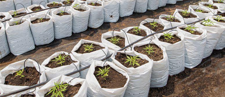 Quand a été inventée l'irrigation au goutte-à-goutte ?