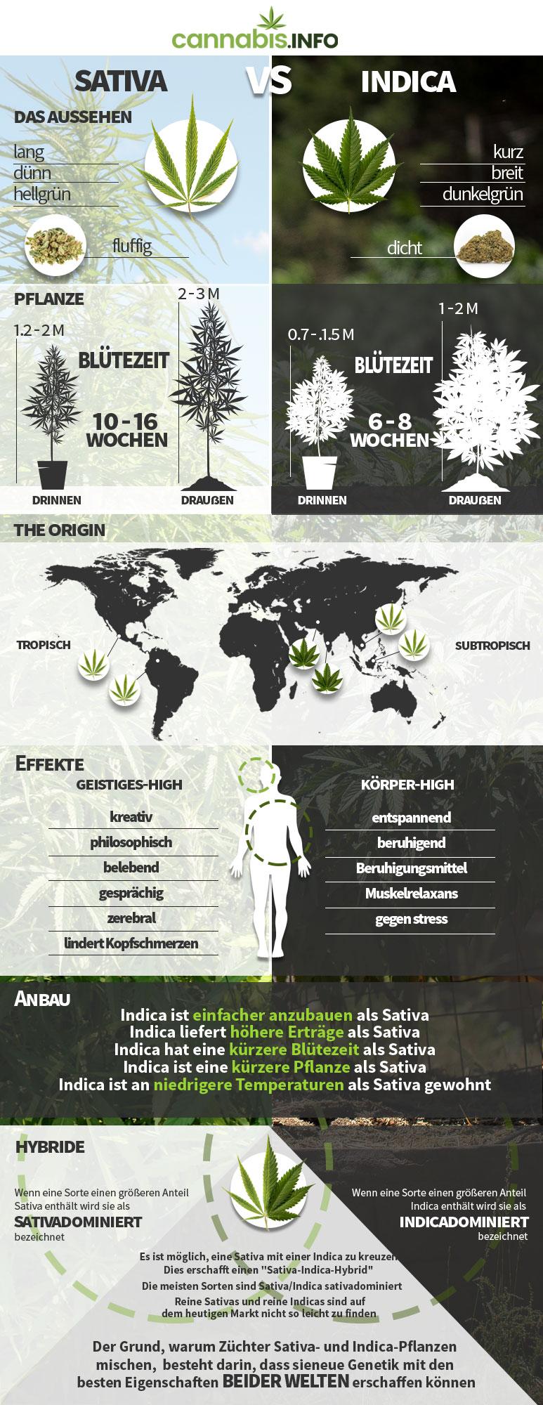 Der unterschied zwischen sativa, indica, ruderalis und hybriden cannabispflanzen