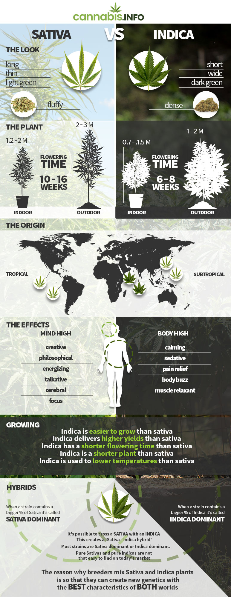 Infographic: difference between cannabis sativa and indica