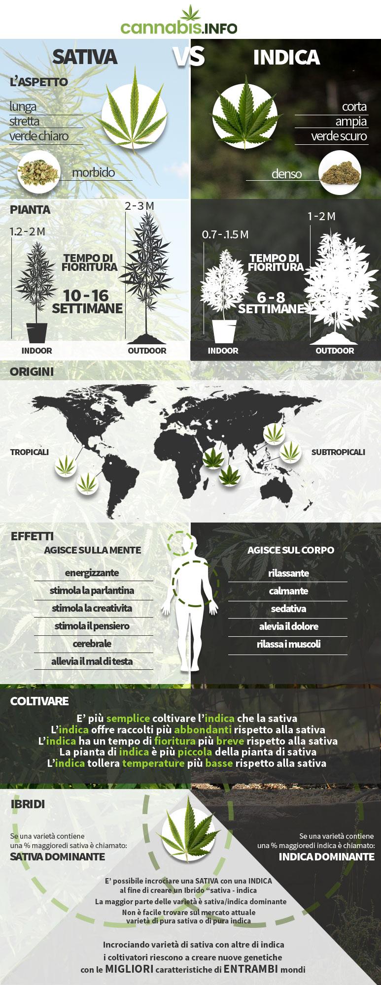 Le differenze tra piante di cannabis sativa, indica, ruderalis e ibride