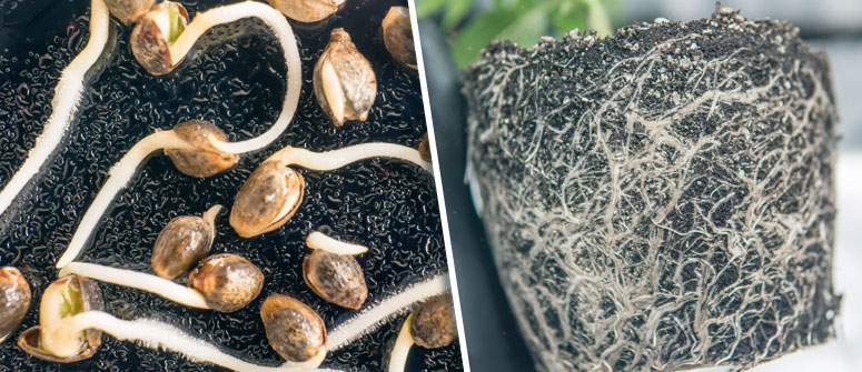 BENEFITS OF GROWING WITH SEEDS