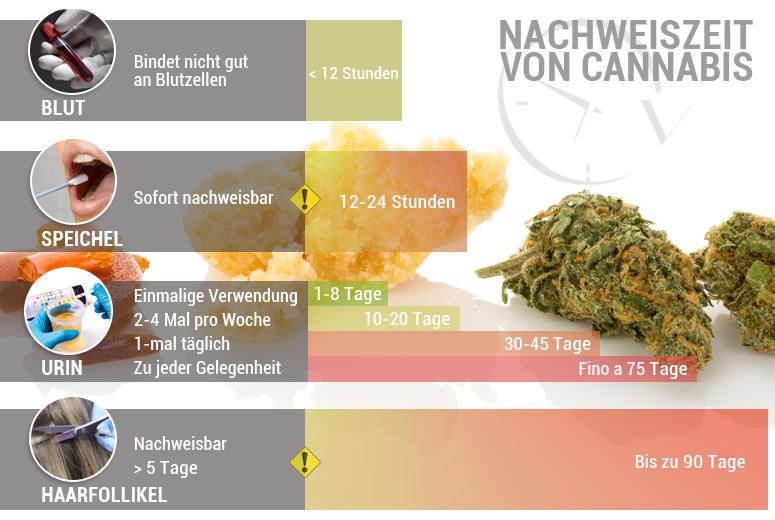 Nachweiszeit von Cannabis: Wie Lange Bleibt THC Nachweisbar