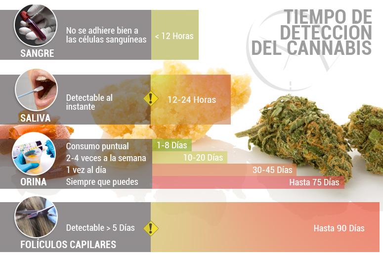 Tiempo de detección del cannabis: ¿cuánto dura el THC en tu organismo?