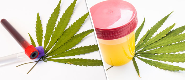 UNDERSTANDING DRUG TESTS
