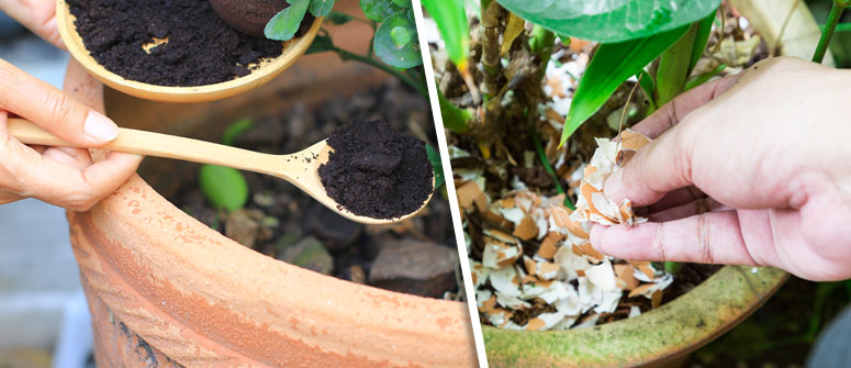 THINGS YOU CAN ADD TO MAKE YOUR OWN FERTILIZER: