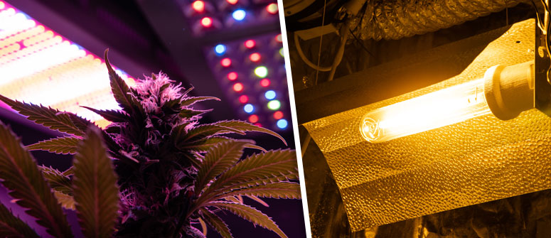6. INSTALL A GROW LIGHT