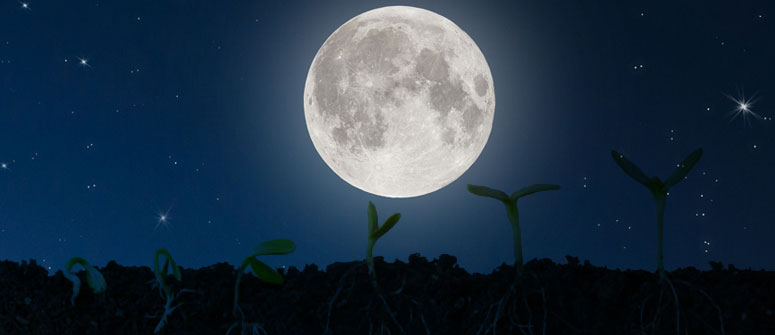 GERMINATE SEEDS DURING THE FULL MOON
