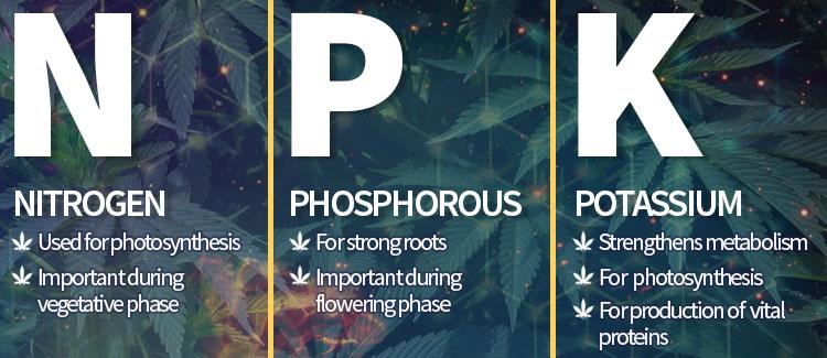 Cannabis base nutrients