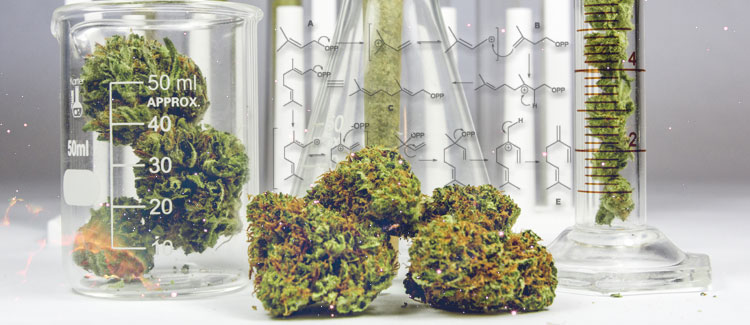 THE SCIENCE BEHIND MYRCENE