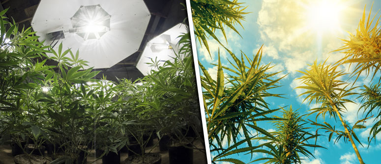 WHAT DOES PHOTOPERIOD MEAN FOR CANNABIS GROWERS?