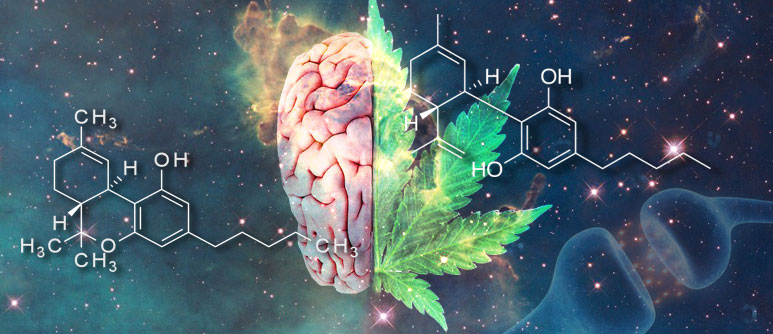 WHAT ARE THE EFFECTS OF THC?