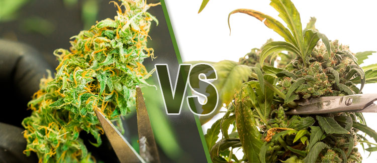 WHAT DOES A HIGH CALYX-TO-LEAF RATIO INDICATE?