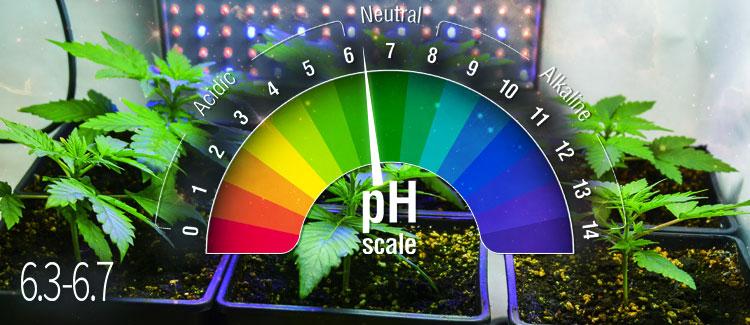 TIERRA pH ideal: 6,3-6,7