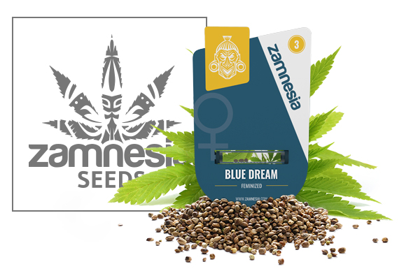 Blue Dream - Zamnesia Seeds