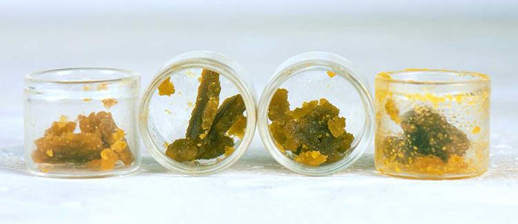 8. concentrados y extracción de cannabis