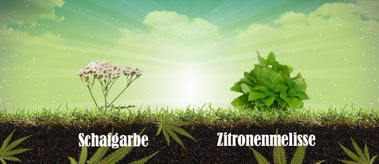 Pflanzen, die die richtigen besucher anlocken