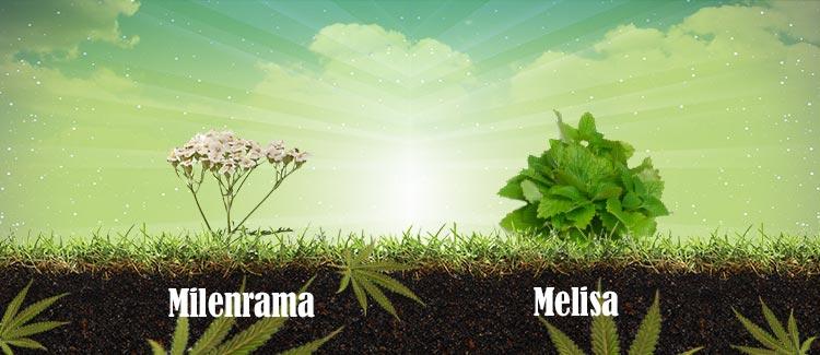 Plantas que atraen buenas visitas