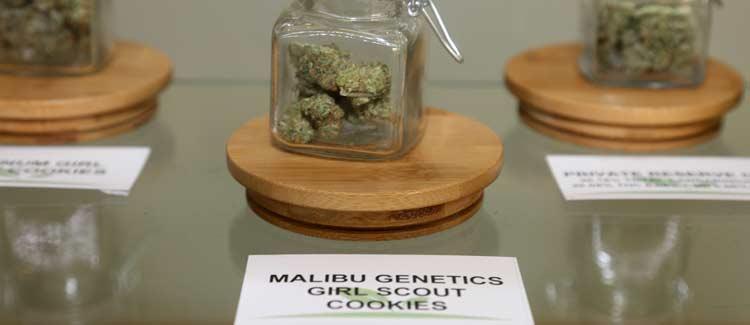 Quel type de cannabis pouvez-vous acheter en californie?