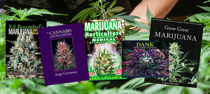A PACK OF CANNABIS SEEDS AND A BOOK ABOUT CANNABIS CULTIVATION