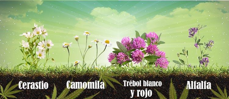 Plantas que ayudan a la salud del suelo