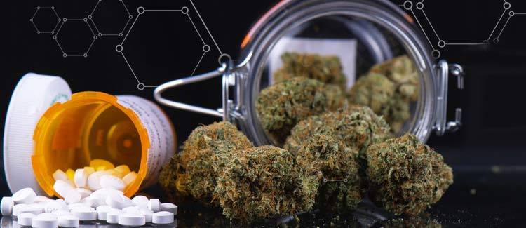 The cancer-fighting potential of cannabis: