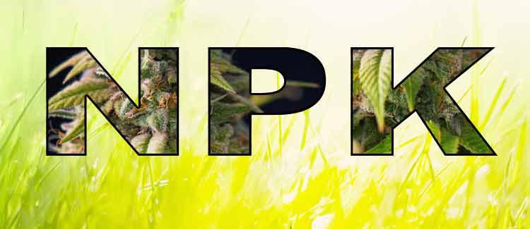 Nutrientes básicos del cannabis