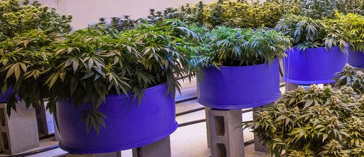 4. neatly arrange your plants