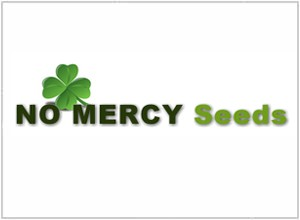 No Mercy Seeds