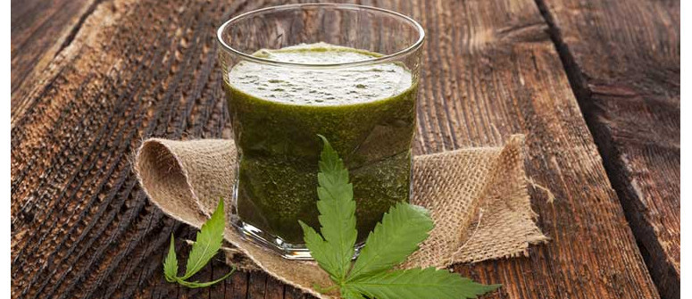 The health benefits of raw cannabis juicing