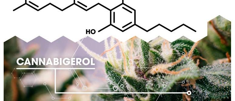 What is cannabigerol (CBG)?