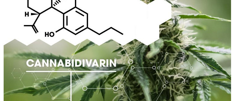 What is Cannabidivarin (CBDV)?