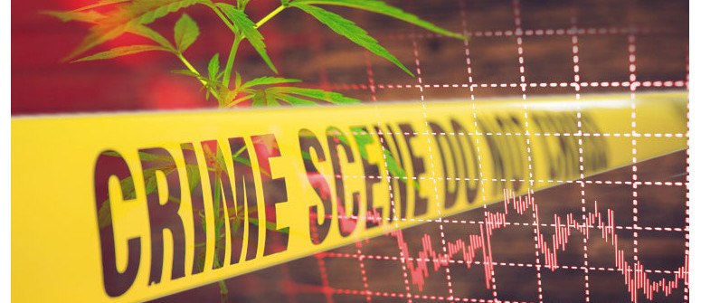 Does legalizing cannabis really reduce crime rates?