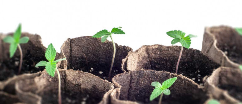 Setting goals for your first cannabis grow