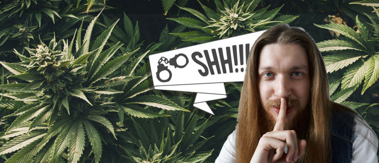 9 Tips on how to grow marijuana as discreet as possible