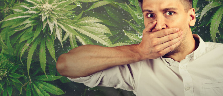 Can cannabis cure the hiccups?