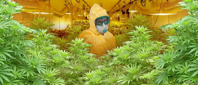 How and why to keep your grow room clean