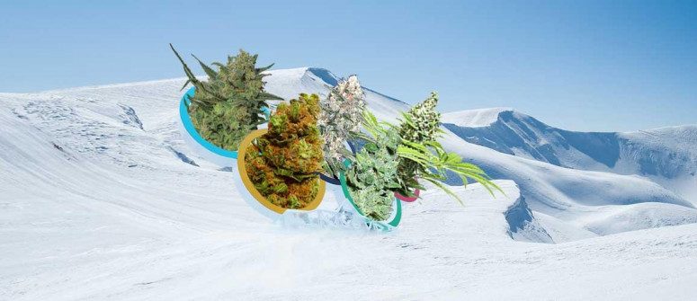 5 Cannabis strains to go with 5 olympic sports
