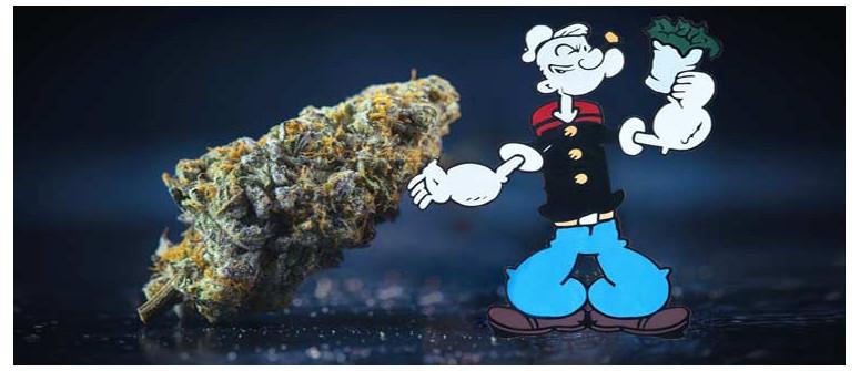 Popeye was a pothead