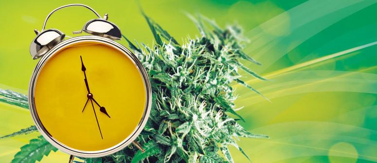 How long does it take to grow marijuana?