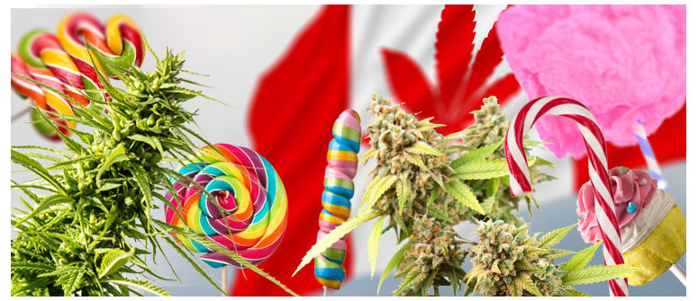 10 Weed strains that might be banned in Canada