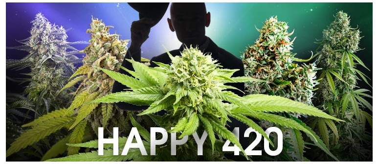 Happy 420! A tribute to 5 of the most influential cannabis strains
