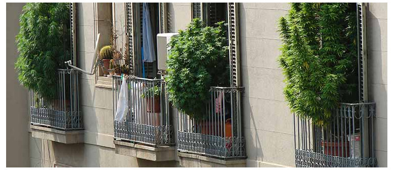 7 tips for growing great weed on your balcony or terrace