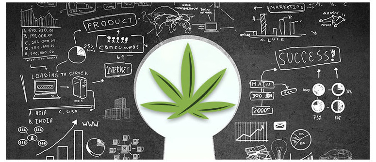10 Cannabis business ideas that'll make you want to quit your day job -  Cannaconnection.com