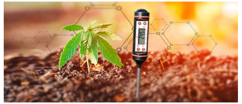 How much does the pH value really matter when growing cannabis outdoors?